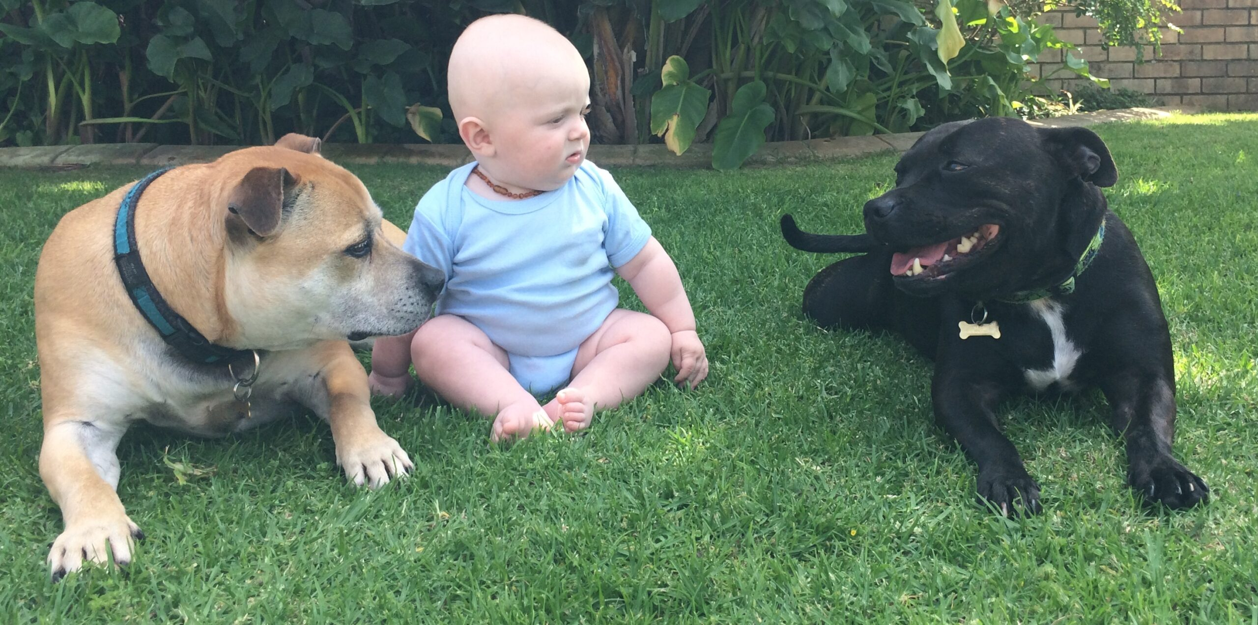"""Introducing a new family member to the """"pack""""."""